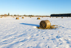 Abandoned field with haystacks by winter Stock Photo