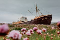 Abandoned fishing boat on the shore of fjord in western Iceland stock images