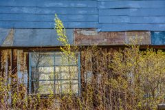Abandoned garden plots in the spring. Collapsed wooden buildings. Abandoned plots Royalty Free Stock Images