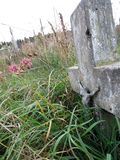 Abandoned grave. In the cementary Royalty Free Stock Photography