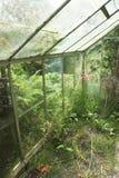 Abandoned Greenhouse Royalty Free Stock Photo