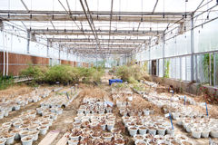 Abandoned Greenhouse Royalty Free Stock Photos