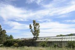 Abandoned greenhouse Royalty Free Stock Photos