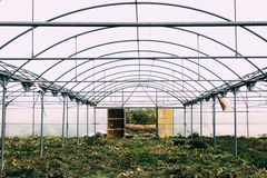 Abandoned greenhouse structure Stock Images
