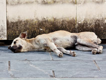 Abandoned homeless stray dog Stock Photography