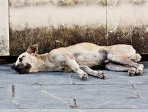 Abandoned homeless stray dog Stock Photography