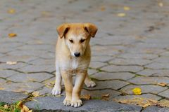 An abandoned, homeless stray dog is standing in the street. Little sad,. Abandoned dog on local road stock photo