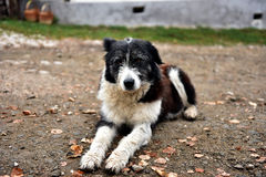 Abandoned homeless stray dog on the street Royalty Free Stock Image