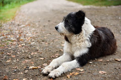 Abandoned homeless stray dog on the street Stock Images