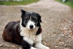 Abandoned homeless stray dog on the street Royalty Free Stock Photos