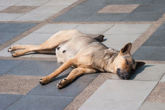 Abandoned homeless stray dog on the street. Stock Photography