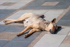 Abandoned homeless stray dog on the street. Stock Photography