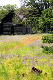 Abandoned Homestead Cabin in field of Wild Flowers. Typical abandoned homestead cabin in a rural country side with wild flowers & wire fence, with chinking still royalty free stock photography