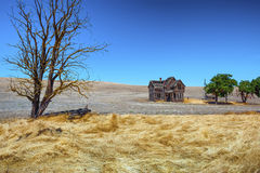 Abandoned Homestead In Dufur Oregon. A grain field surrounds this abandoned homestead in Dufur, Oregon. An old wagon is stationed under a dead tree stock photo