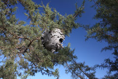 Abandoned Hornet S Nest Stock Image