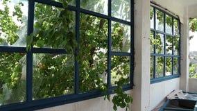 Abandoned hotel. Broken windows inside abandoned hotel stock video