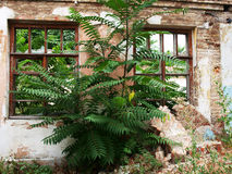Abandoned house closeup. European abandoned house closeup was overgrown with bushes and trees royalty free stock photo