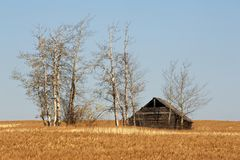 Abandoned house and a field of ripe wheat Royalty Free Stock Photos