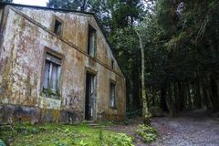 Abandoned house in forest royalty free stock photography