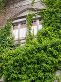 Abandoned house invaded by nature Royalty Free Stock Images