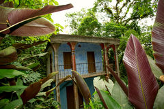 Abandoned house in the jungle Royalty Free Stock Images