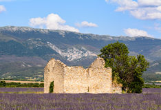 An abandoned house, in a lavander field. Near Valensole in Provence stock image