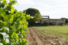 Abandoned house in the middle of the vineyard royalty free stock photo