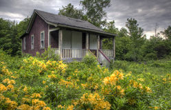 Abandoned House with Overgrown Yard. An abandoned house with wood over windows stands in an overgrown yard with yellow flowers Royalty Free Stock Image