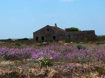 Abandoned House With Pink Flowers On Ilha De Culatra Portugal stock photo