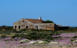 Abandoned House With Pink Flowers On Ilha De Culatra Portugal stock photography
