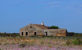 Abandoned House With Pink Flowers On Ilha De Culatra Portugal stock image