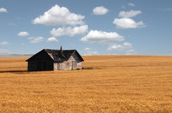 Abandoned house in prairie wheat field.
