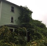 Abandoned house. Trees taking over front porch of abandoned Stock Photography