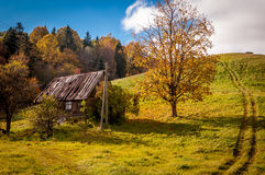 Abandoned house under the tree Royalty Free Stock Images