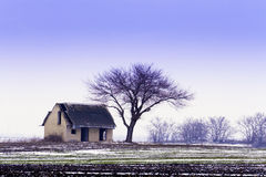 Abandoned house, winter bald tree. Stock Photography