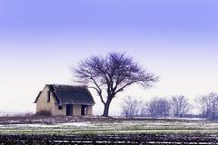 Abandoned house, winter bald tree. stock photography