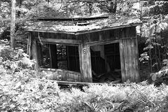 Abandoned house in the woods. In black and white Royalty Free Stock Image