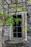 Abandoned house with a young tree Stock Images