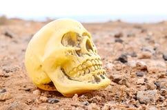 Abandoned Human Skull Stock Photography