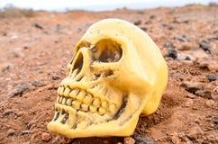 Abandoned Human Skull Stock Photo