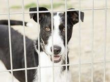 Abandoned hunting dog stock images