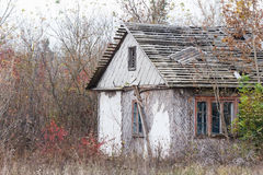 Abandoned hut among trees and bushes. In autumn Stock Photos