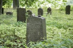 Abandoned Jewish cemetery in the woods near Havlickuv Brod, Czech republic, graves surrounded with weeds. Sunlight, covered with greenery, jungle stock images