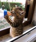 Abandoned kitten Stock Images