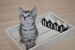 Abandoned kitten looking for her new home Royalty Free Stock Image