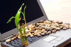 Abandoned Laptop Computer with Growing Bamboo Stock Photos