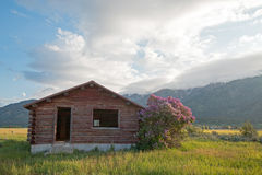 Abandoned Log Cabin along the Snake River in Alpine Wyoming USA royalty free stock photos