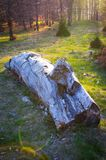 Abandoned log in the forest Royalty Free Stock Photo