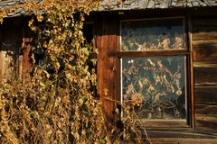 Abandoned log house Detail of wall and window Stock Photography