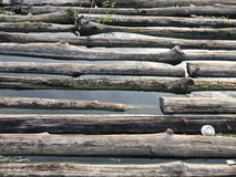 Abandoned logs field Royalty Free Stock Photo